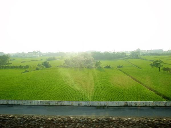 21.綠油油的稻田