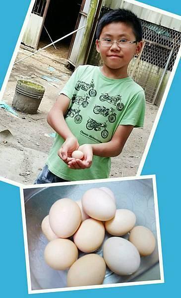 20.土雞蛋收成
