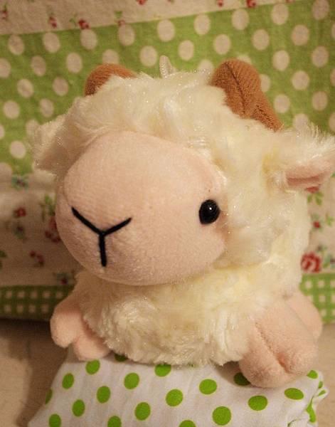 2-6民宿送的小綿羊