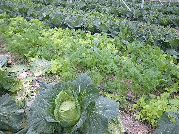4-13蔬菜們