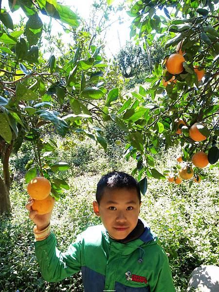 32-1.採橘樂