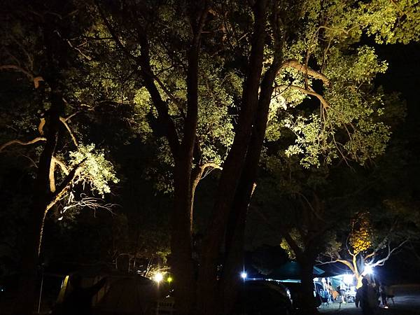 25.光影樹景
