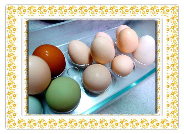 18.小土雞蛋們