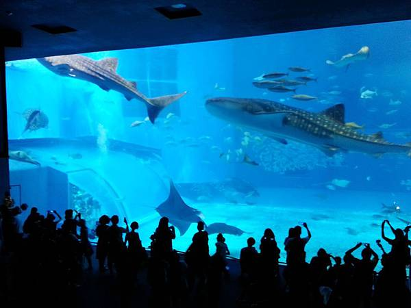29.巨大室內水族館