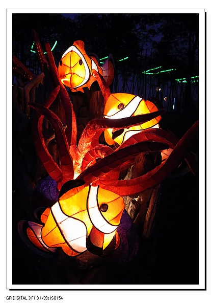 2.小丑魚.JPG