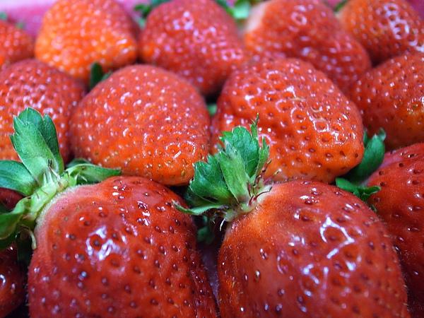 5.昨天現採的草莓.JPG