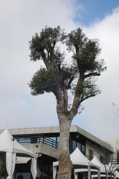 18樹與白屋頂.jpg