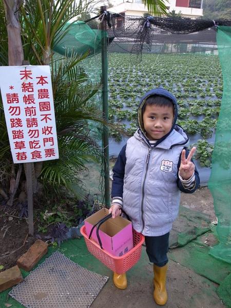Gino準備採草莓.jpg