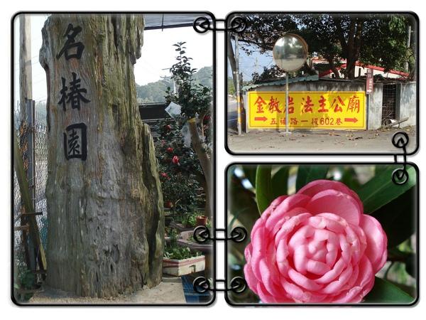 2-1名椿園的茶花種植場.jpg