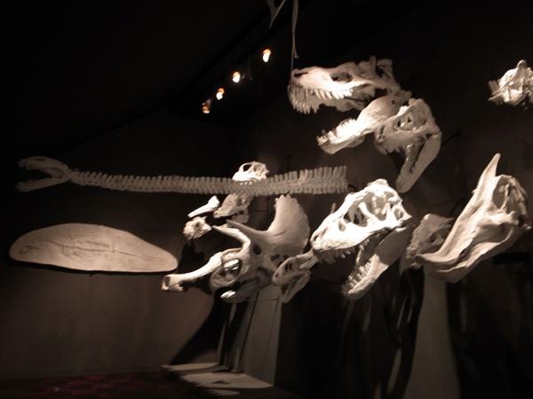 14.各式恐龍頭化石.jpg