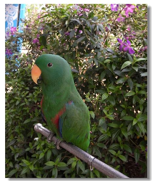 22.綠色鸚鵡.jpg