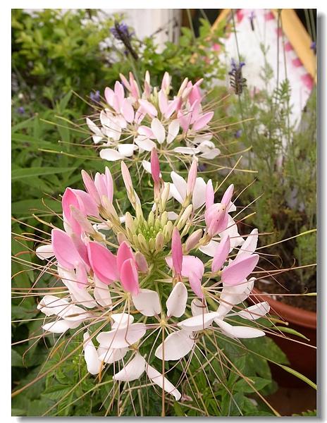 1-7漂亮花朵.jpg