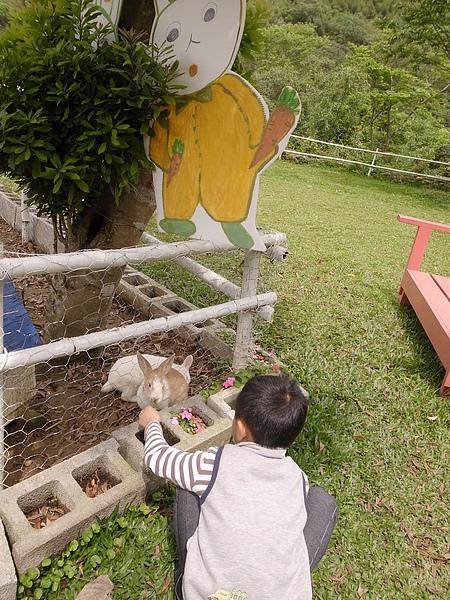 1-9小白兔區餵兔子.jpg