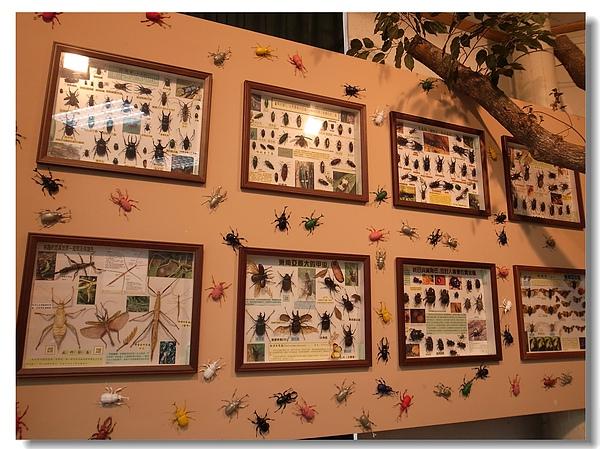13.叢林生態館的甲虫.jpg