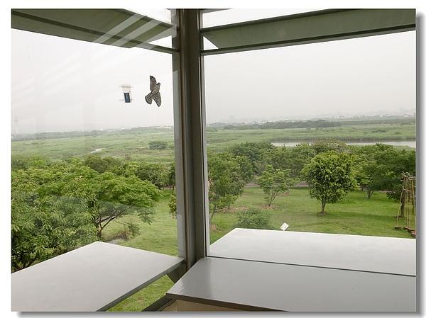 4.透視綠意的玻璃窗.jpg
