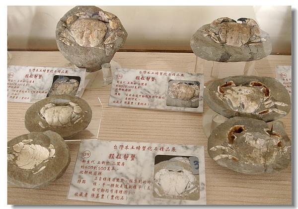 8.螃蟹化石.jpg