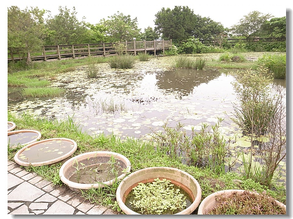 9.水草生態池.jpg