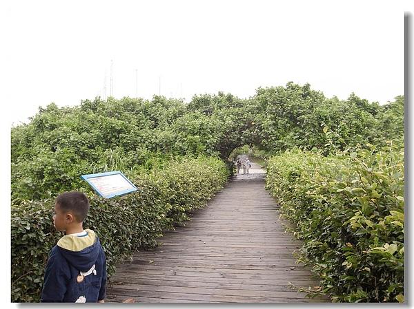 3.紅樹林步道.jpg