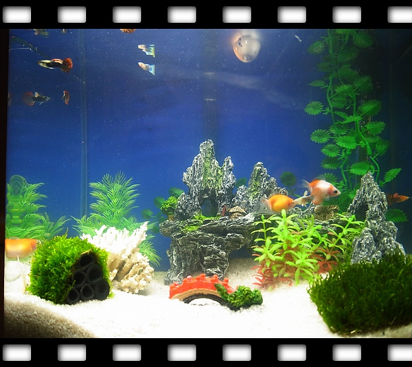 8.我家的快樂魚缸.jpg