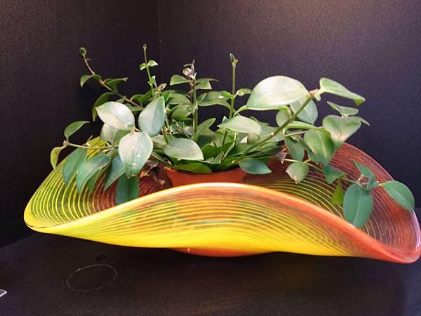 16.玻璃盤與植物搭配.JPG