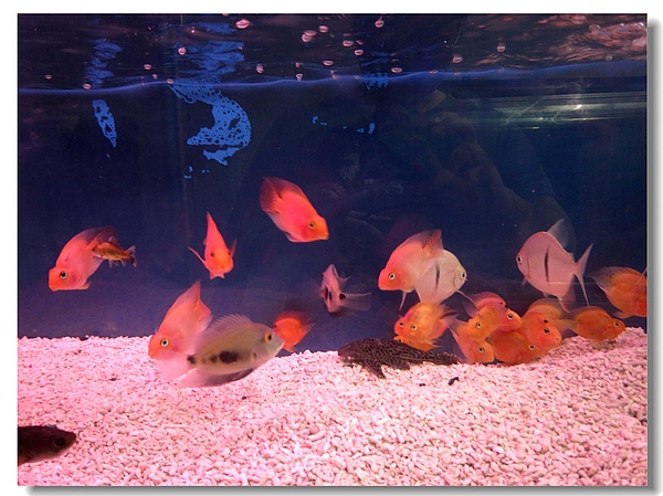 7.悠游的魚兒.jpg