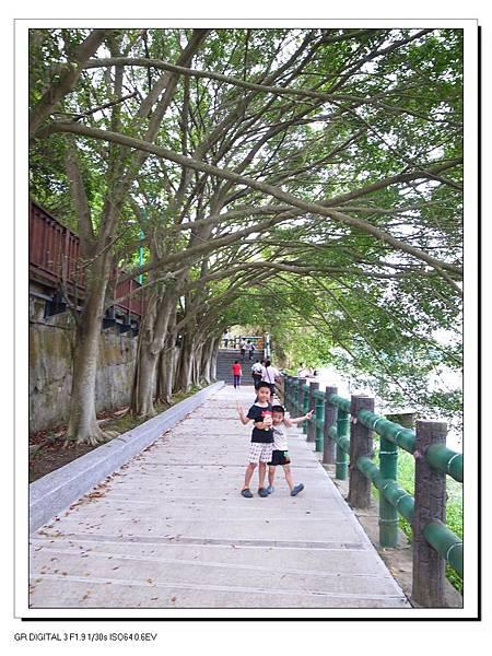 7.青草湖的綠蔭大道.JPG