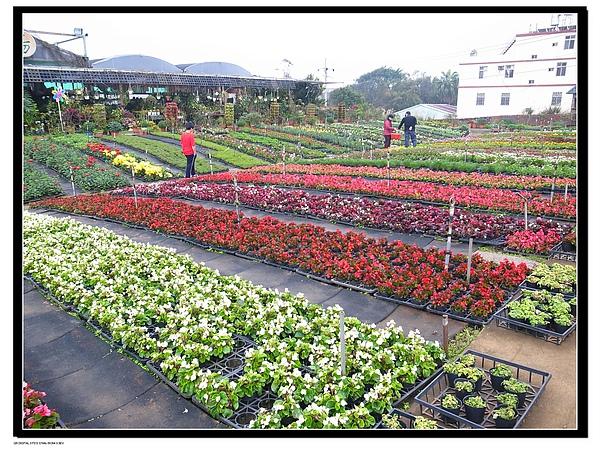 1.青松農場.JPG