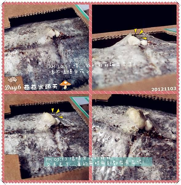 6.20121103 Day6 菇菇出頭天