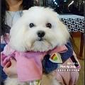 錢先生的可愛狗狗 ^ ^