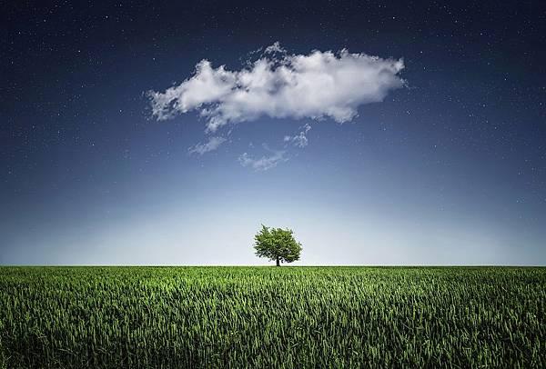 tree-736887