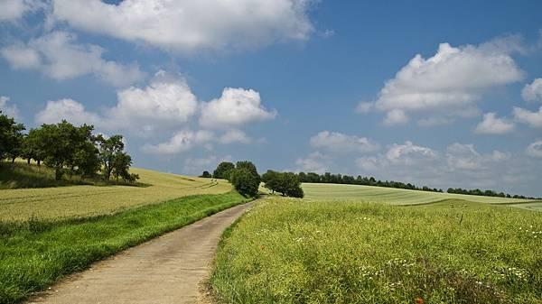 field-175959