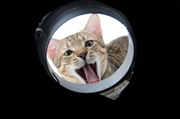 cat-875798_1920.jpg