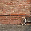 cat-2536949_1920.jpg