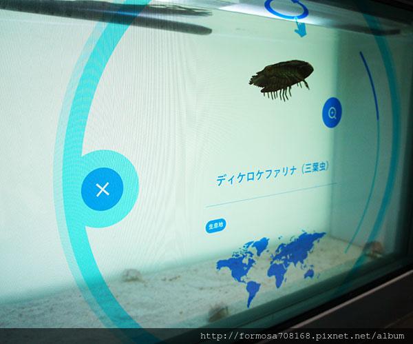 海豚舞動櫻花中-飯店裡的水族館7.jpg