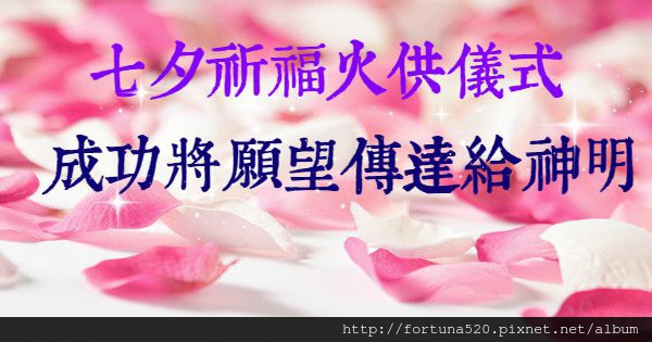 mood-flowers-roses-rose-petals-pink-red-love_副本33
