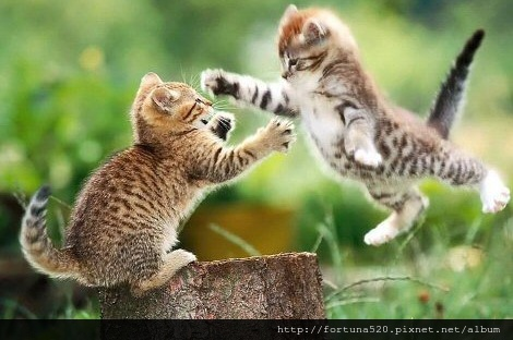 channelweb-channelinsider-cat-fight