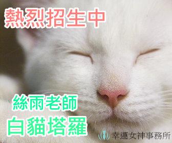 白貓廣告3.jpg