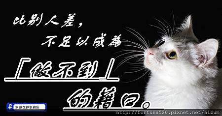 cat-1558956_960_720_副本.jpg