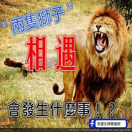 Just_one_lion_副本.jpg