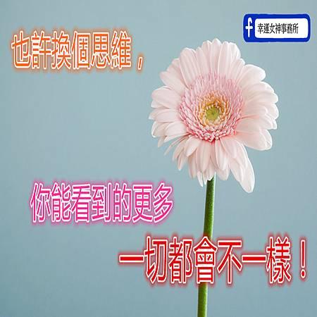photo-1471899236350-e3016bf1e69e_副.jpg