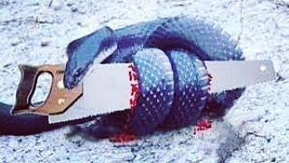 鍾絲雨 元辰宮 前世今生 蛇與鋸子