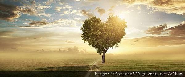 愛的生命樹