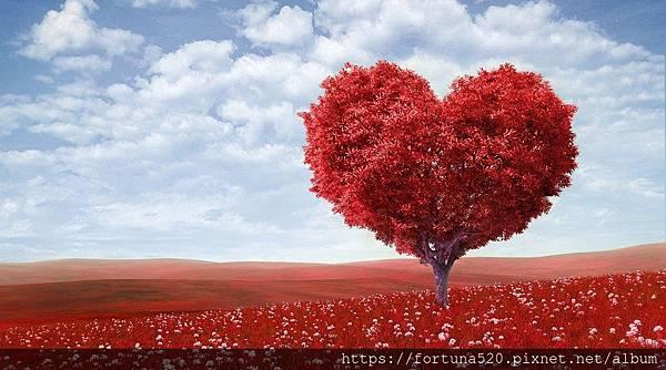 愛的生命樹1