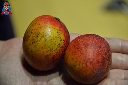 奇怪水果26.png