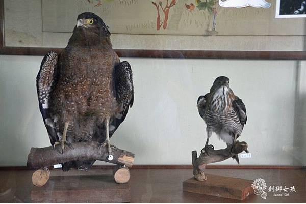 安順鹽場四草生態保護區 28.jpg