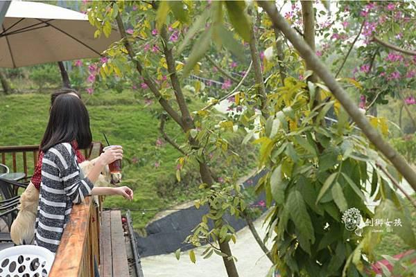 森呼吸寵物農場Jorona park112.jpg