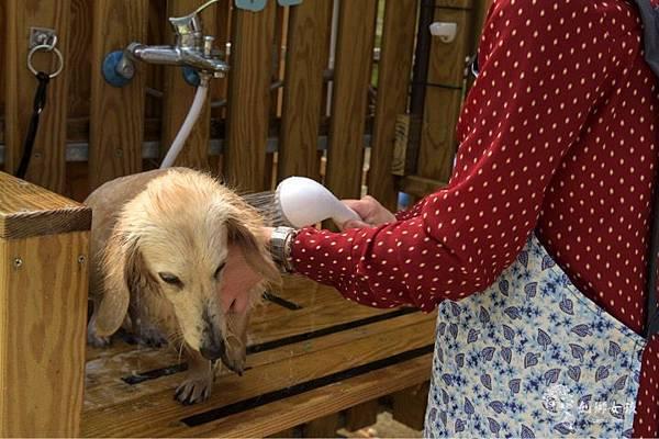 森呼吸寵物農場Jorona park63.jpg
