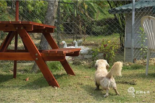 森呼吸寵物農場Jorona park49.jpg