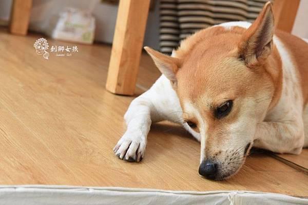 銅錢草茶屋寵物友善民宿 36.jpg