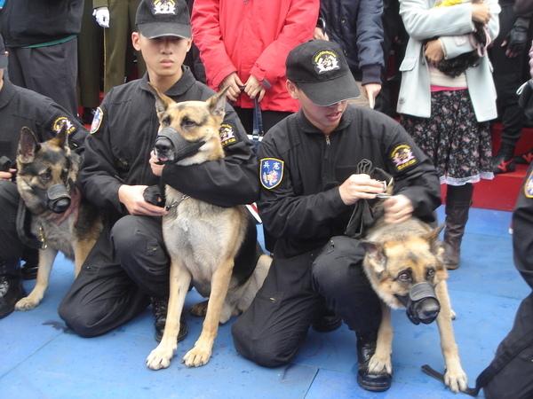 這些軍犬真的很緊張